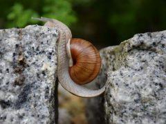 Backend WordPress Lento: il problema di PHP